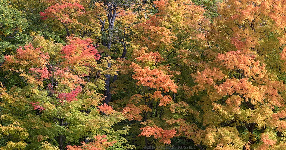 fall maple foliage colour in gatineau park