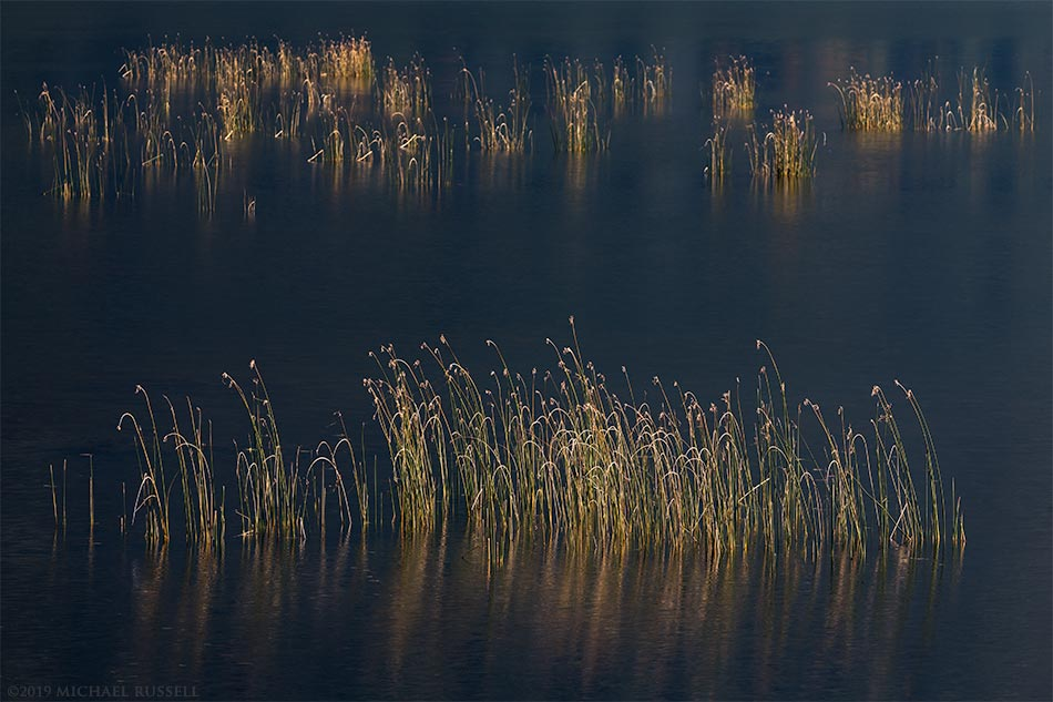 plants growing in katzie marsh