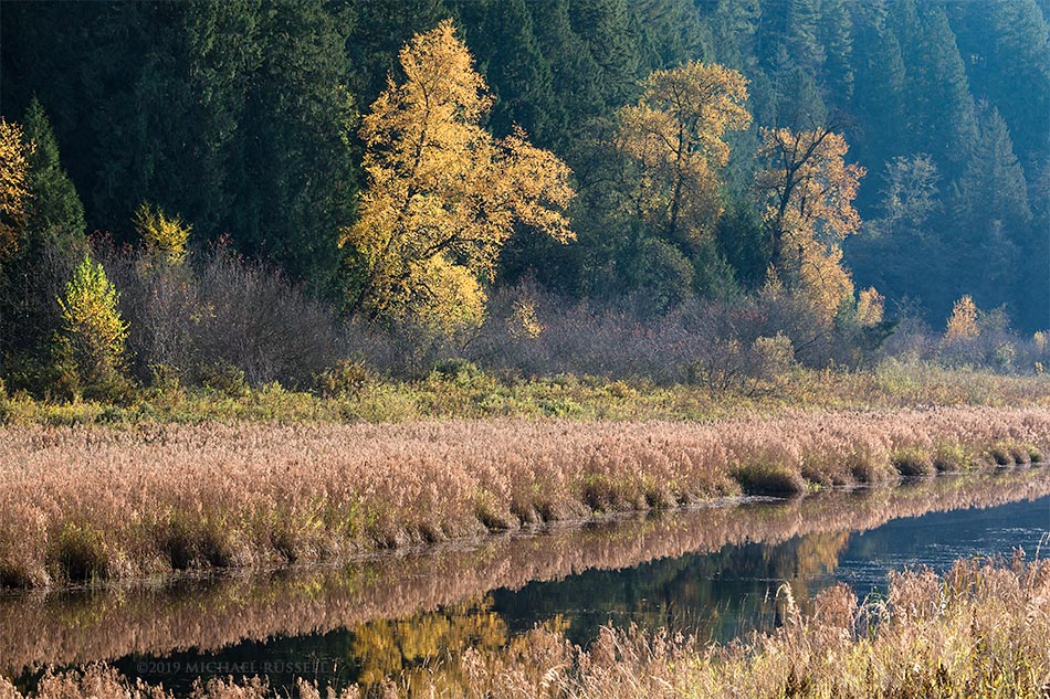 fall foliage along the katzie marsh loop trail in pitt meadows