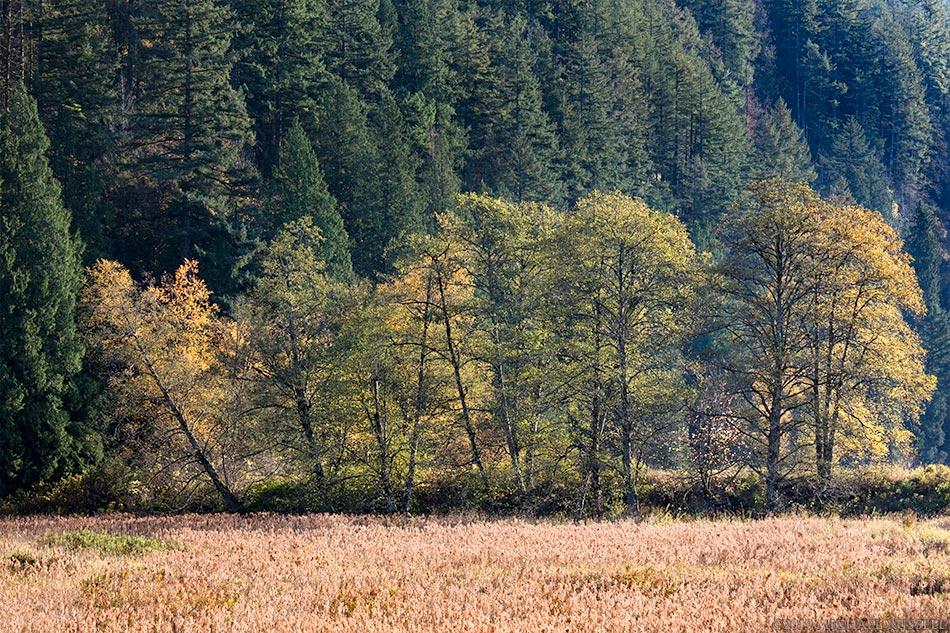 autumn leaves trees foliage katzie marsh pitt meadows