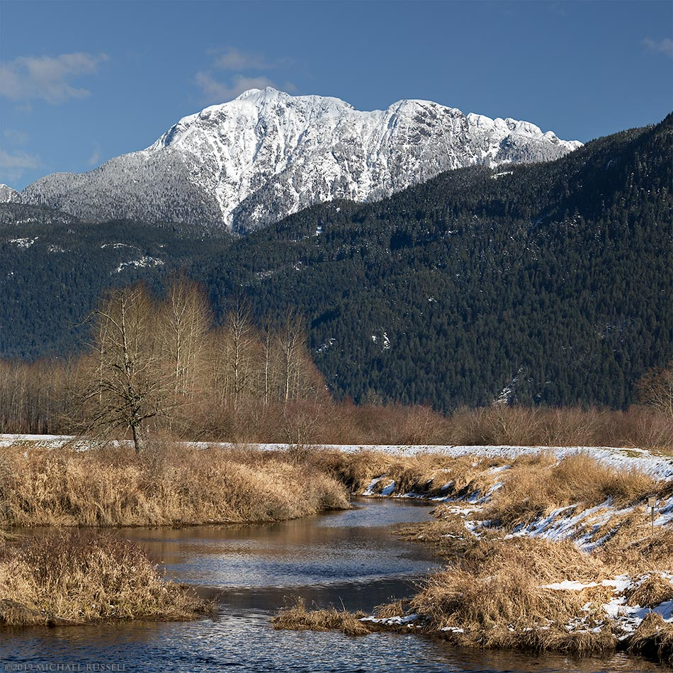 golden ears from pitt meadows