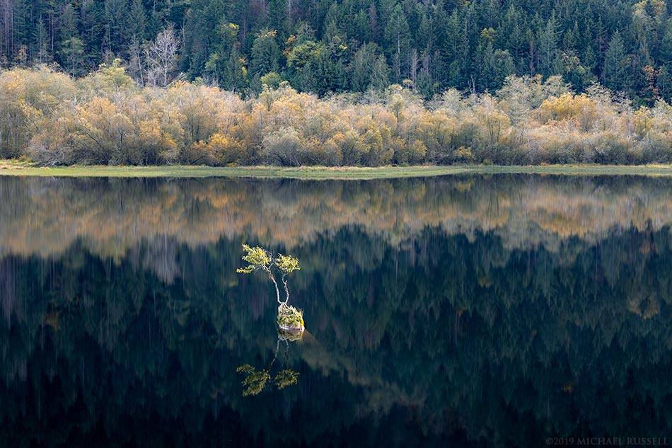 bonsai tree at silver lake provincial park reflection fall