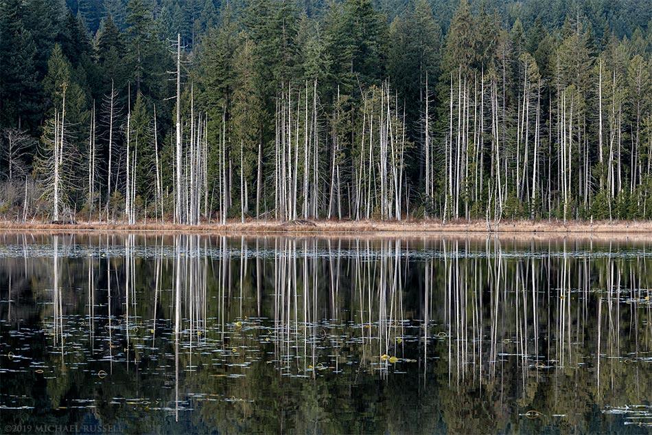 whonnock lake trees shoreline